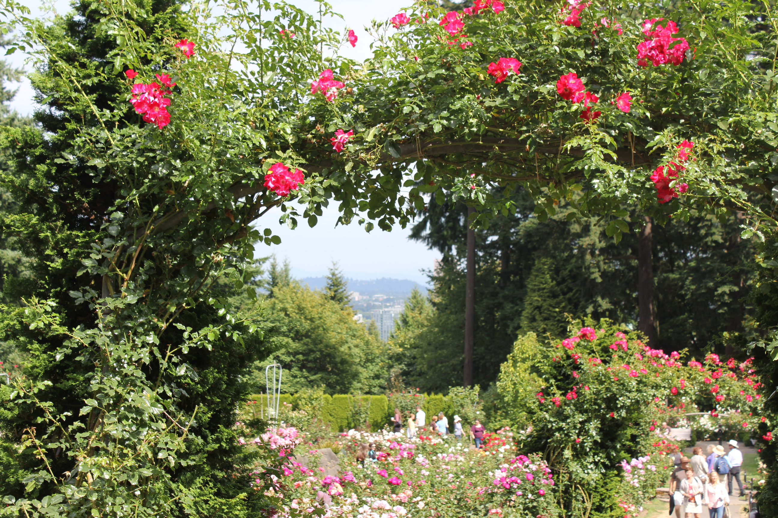 Entrance To Portland Rose Gardens : Portland where roses bloom pinot flows and food gers