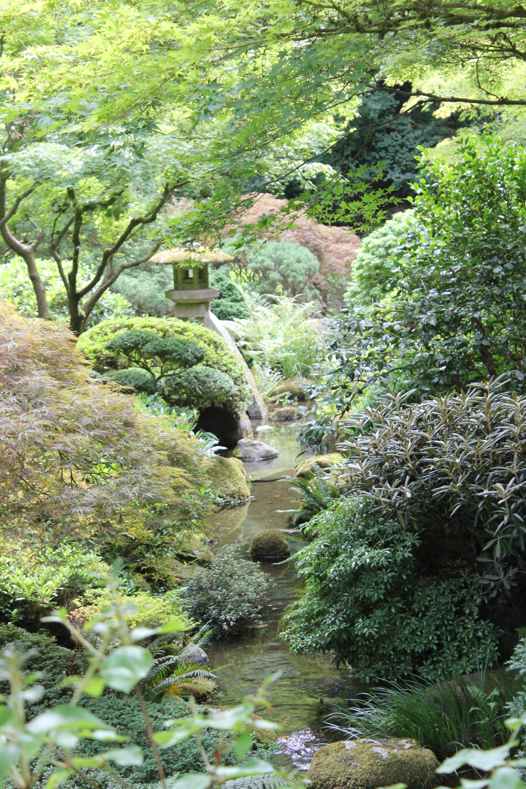 Portland where roses bloom pinot flows and food bloggers for Portland japanese garden koi