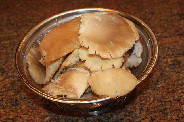 Fresh oyster mushrooms